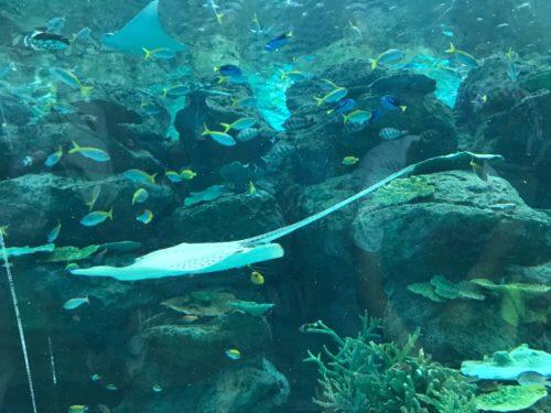 名古屋港水族館へのアクセス 行き方は?