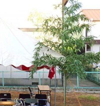 地鎮祭の竹の長さはどれくらいがいいの?