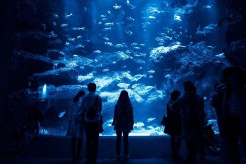 名古屋港水族館のおすすめの順路は?