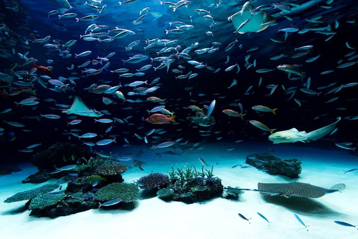 名古屋港水族館に赤ちゃんといくときは?