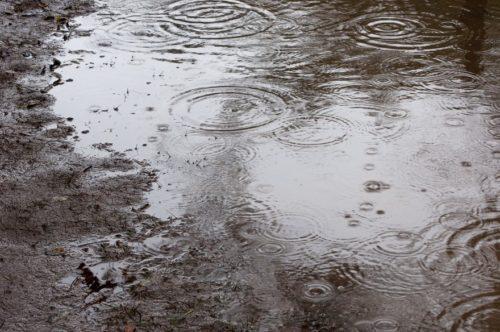 名古屋港水族館のイルカショーが雨の場合は?