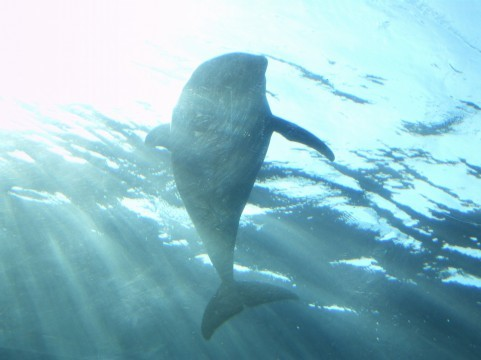 名古屋港水族館のイルカショーで濡れないためには?