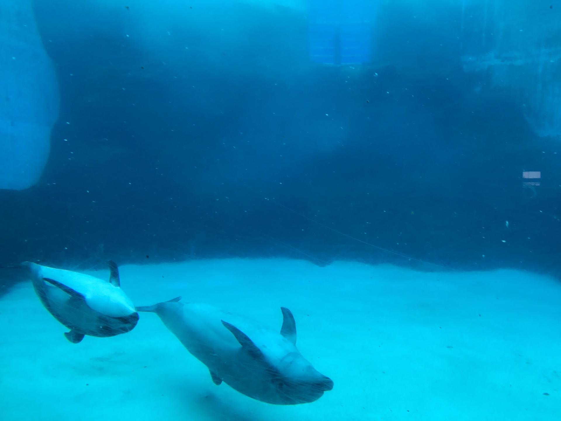 名古屋港水族館のイルカショーは?