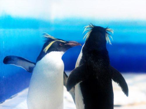 名古屋港水族館のペンギンは?