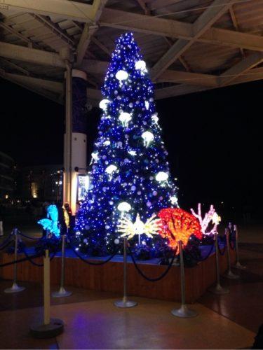 名古屋港水族館のクリスマスは混雑する?営業時間は?花火についても詳しくご紹介!