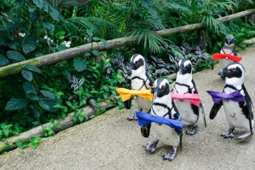 名古屋港水族館のペンギン散歩って何?