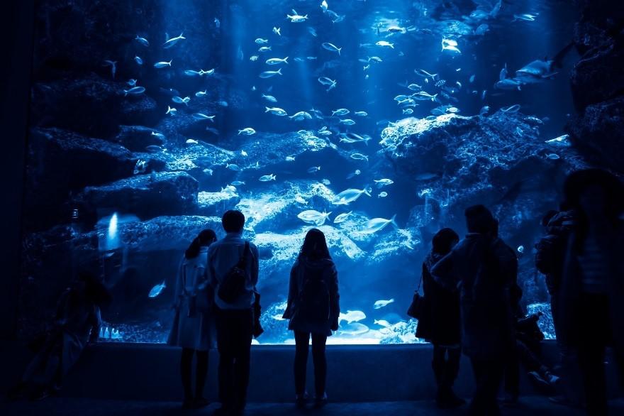 名古屋港水族館の年パスは?更新は?再発行できるのかも詳しく説明!