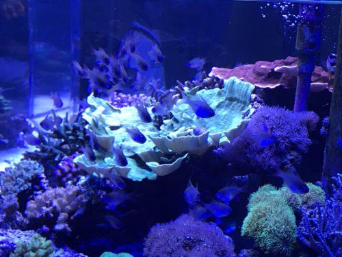 名古屋港水族館の年間パスは更新できるの?やり方は?