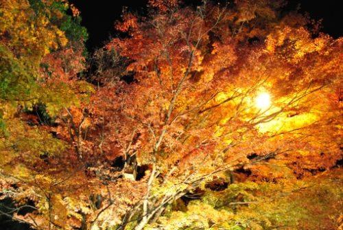 香嵐渓の紅葉 ライトアップの期間は?