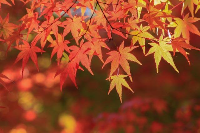 足助の紅葉は夜も!香嵐渓 ライトアップの期間や場所もご案内!