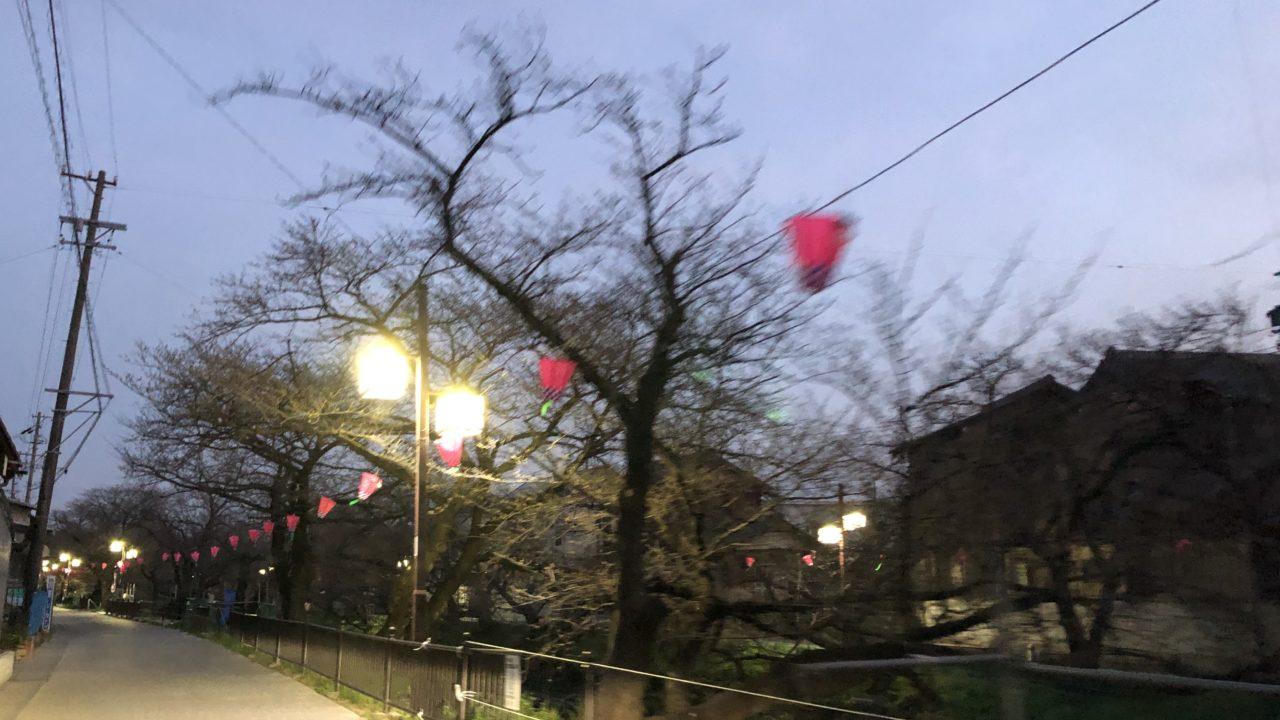 岩倉の桜祭りの場所は?どこで規模はどれくらい?