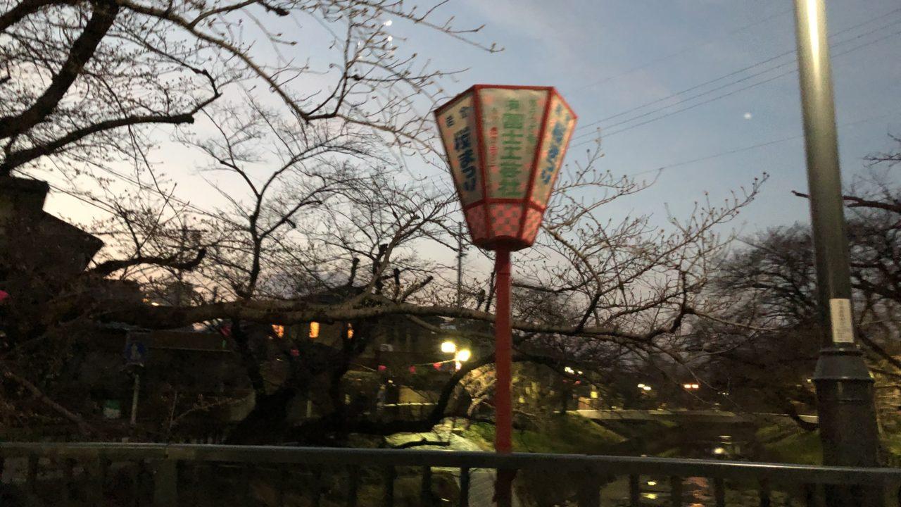五条川桜まつり☆期間と場所と時間を地元民の私が写真画像付で紹介!