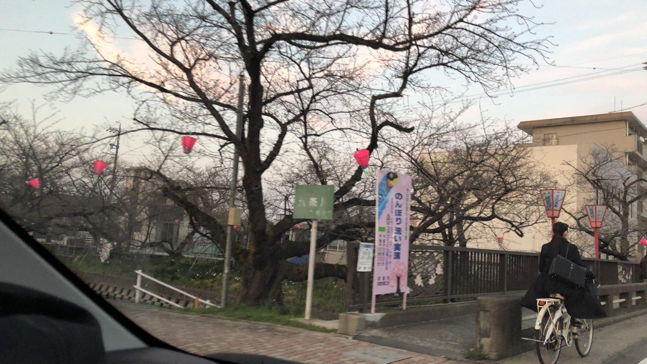 五条川の桜祭り☆どんな感じなの?