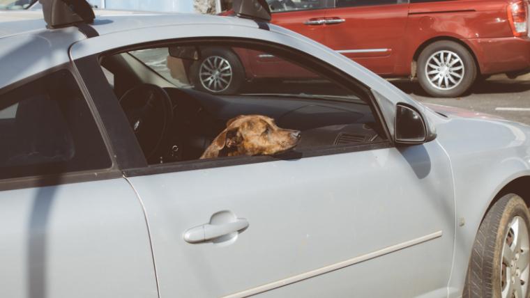 ムーミンバレーパークに車で行く場合のアクセス