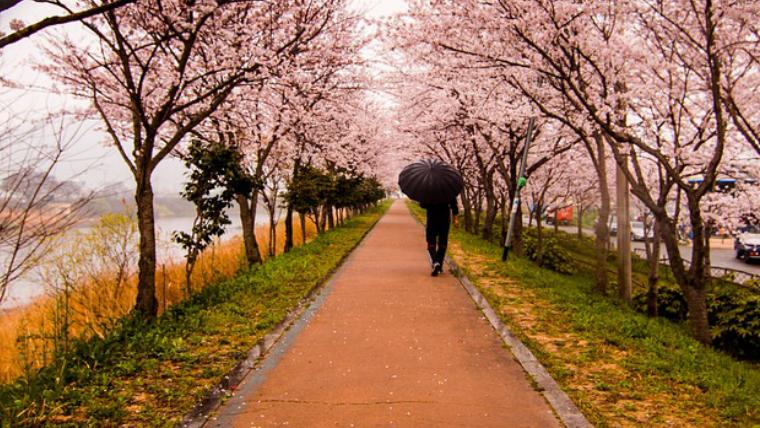 日中線の桜の見頃は?いつが一番きれい?