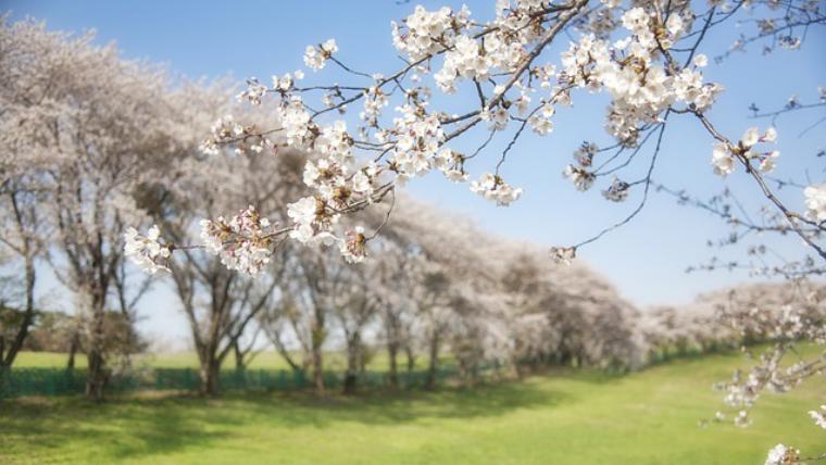 日中線のしだれ桜☆どんな感じなの?SNSから実際の写真画像を探してきたよ♪
