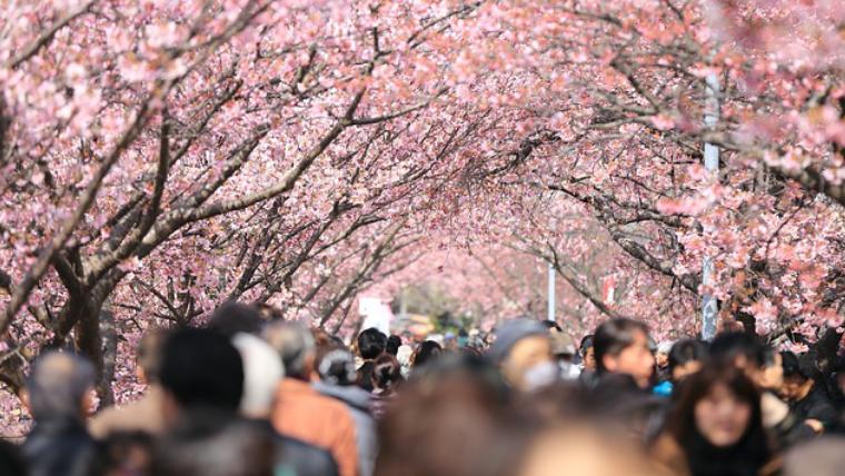 喜多方の桜は混雑する?いつがおすすめ?